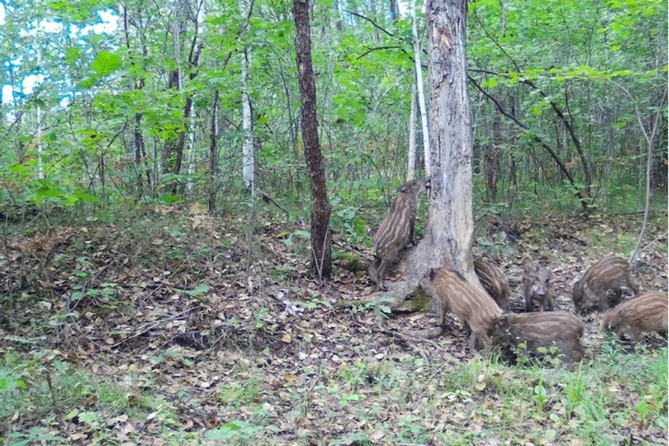 Единственна система в мире спасает лес в Хабаровском крае от «черных» лесорубов