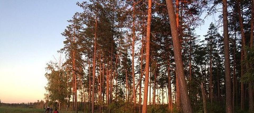 В семи лесничествах области предстоит посадить и дополнить 148 гектаров леса.