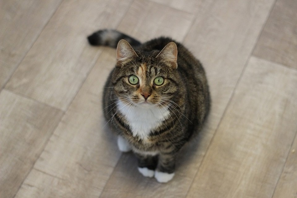 Вот такая застенчивая красавица ищет новых хозяев. Фото: vk.com/newdomcat