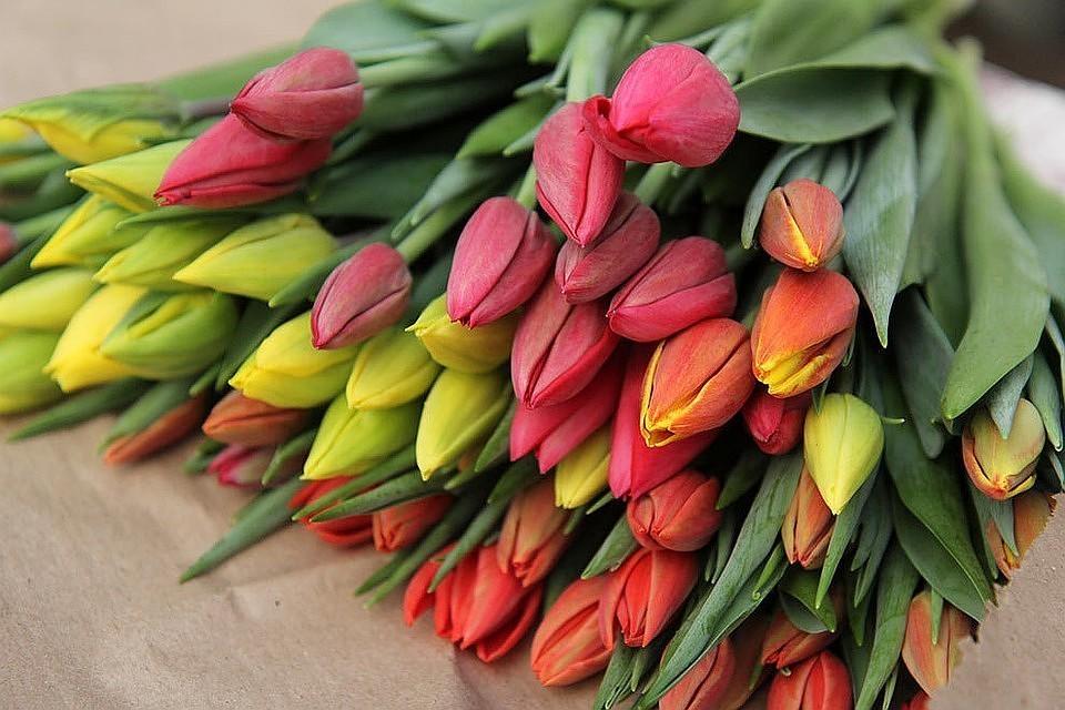 В Амстердаме туристам продают непригодные для посадки луковицы тюльпанов