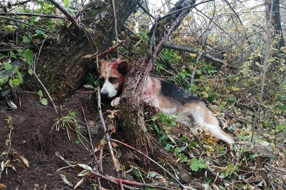 Пса отвезли в клинику неравнодушные люди. Фото: соцсети