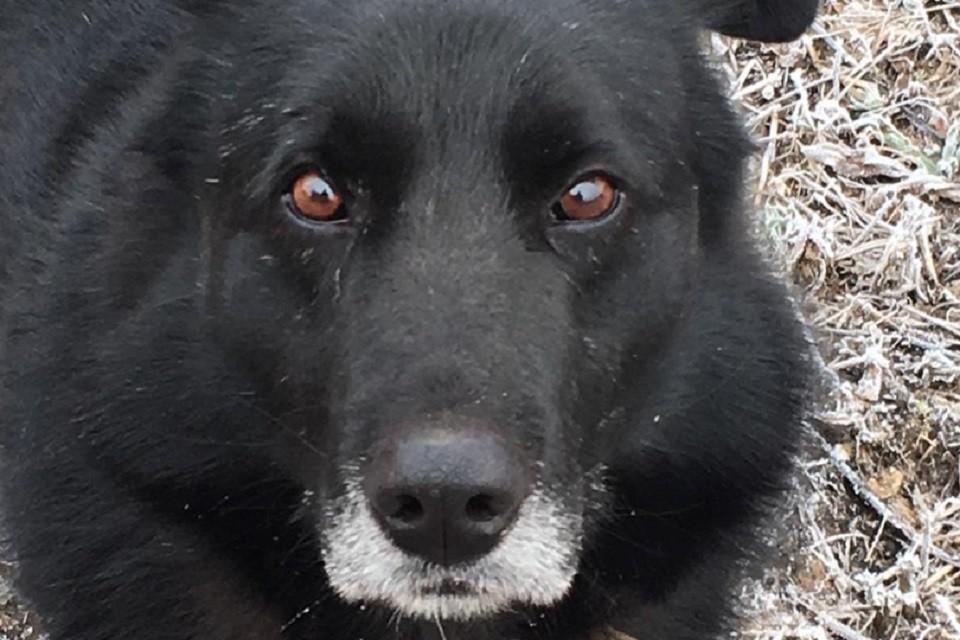 Иркутскому псу Чегару повезло: он нашел своего человека. Фото хозяйки Елены.