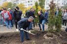 Депутаты донского парламента высадили новую аллею в парке «Дружба»