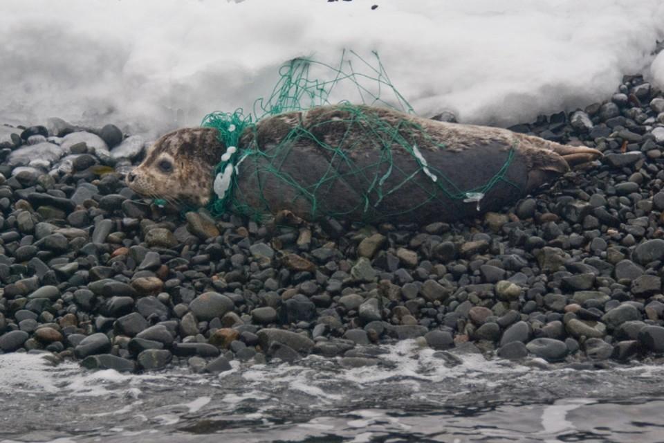 Специалисты бьют тревогу. Фото: Дальневосточный морской заповедник.