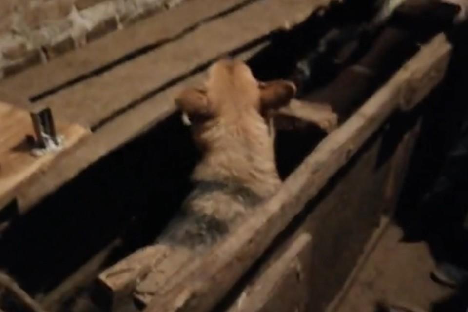На живодерне под Нижним Новгородом нашли десятки собак, заколоченных в ящики. ФОТО: Лариса Саплина
