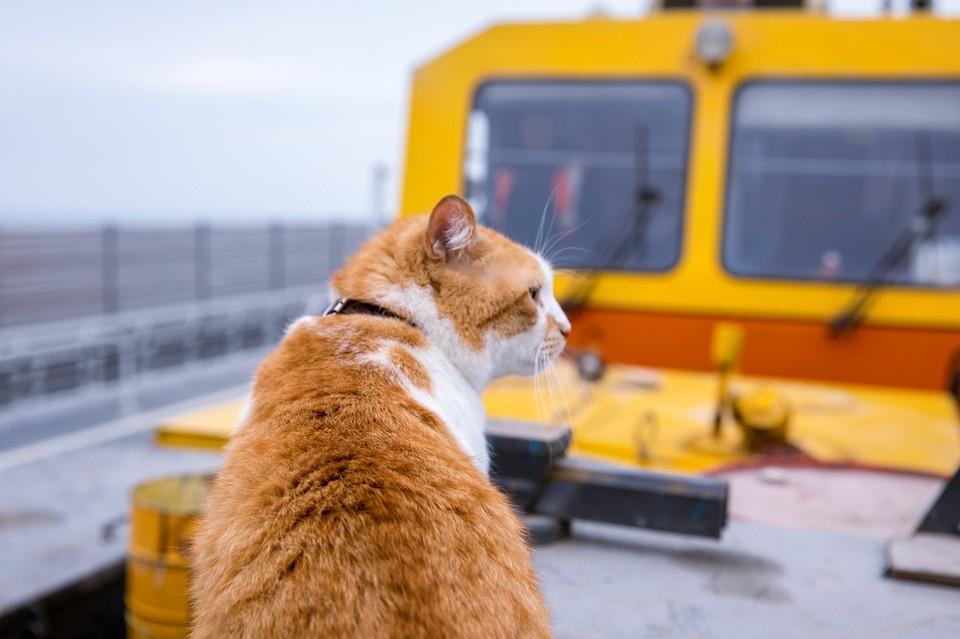 Рыжий помогает мостостроителям. Фото: кот Мостик/VK