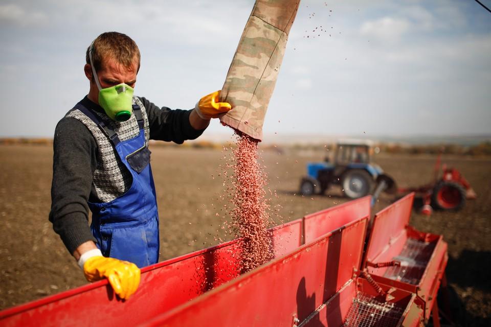 Чтобы труды сельчан не пошли прахом, нужен хотя бы небольшой снежный покров.