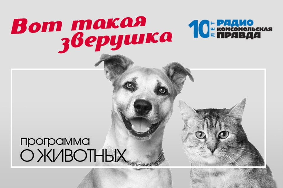 Как и что видят кошки и собаки
