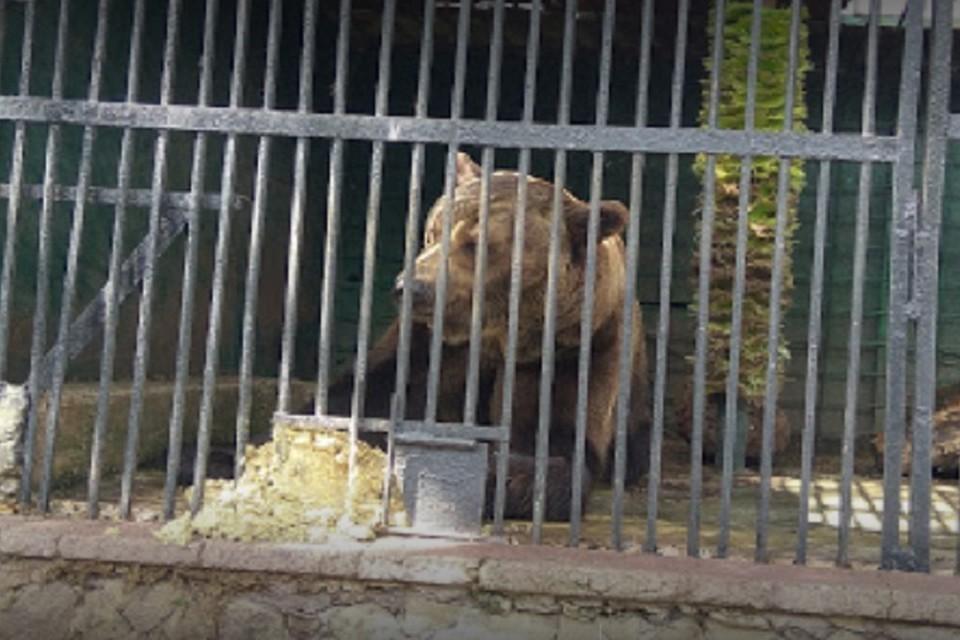 Из-за аномально теплой зимы в кишиневском зоопарке просыпаются медведи