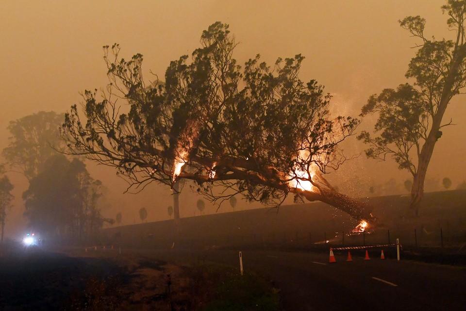 Пожары на территории Австралии могут повлиять экологию на планеты в целом и привести к температурным изменениям