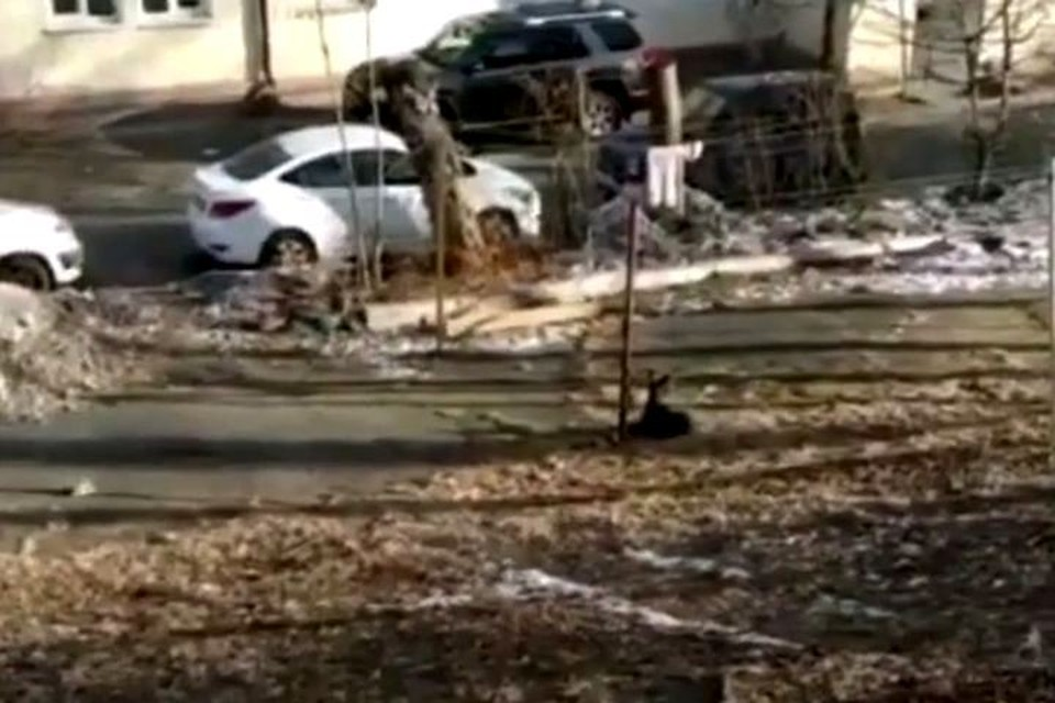 Привязанное животное оставляют на улице. Фото: print screen видео
