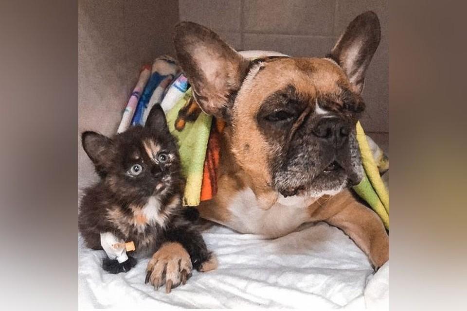 Котенок-инвалид жалеет других пациентов ветклиники. Фото: «Из жизни городского приюта»
