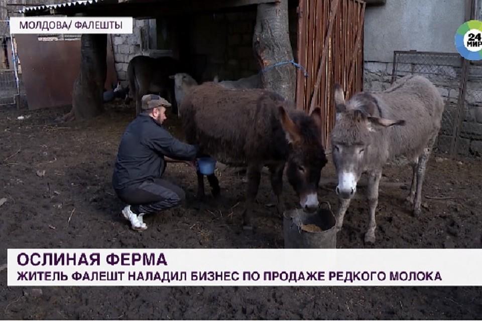 Житель Молдовы вылечился от рака благодаря ослиному молоку