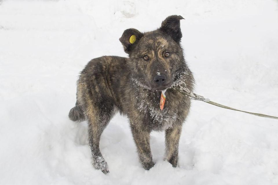Добрым собакам крепят на уши бирки, а потом выпускают на улицу. Фото: Новосибирский центр по проблемам домашних животных.