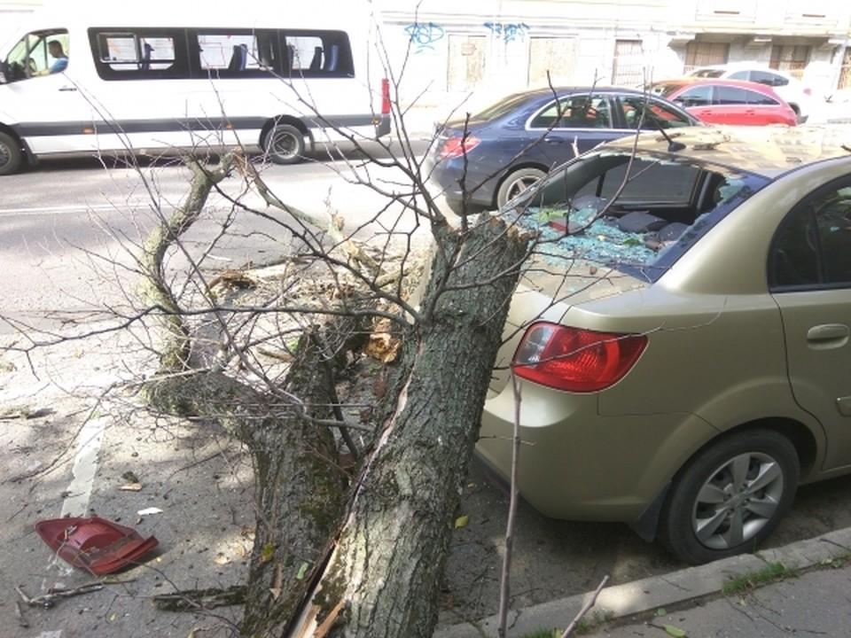 Машину рядом с деревьями сегодня лучше не парковать.
