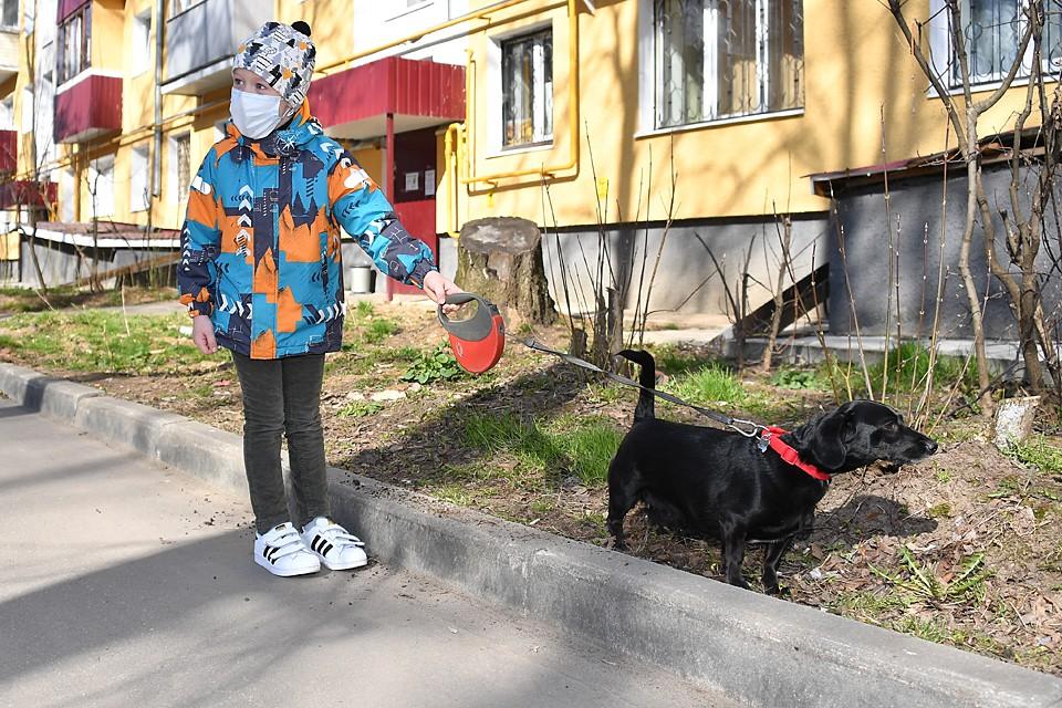 Сегодня роста респираторных инфекций у кошек и собак не наблюдается. Нет поводов, чтобы избавляться от питомцев