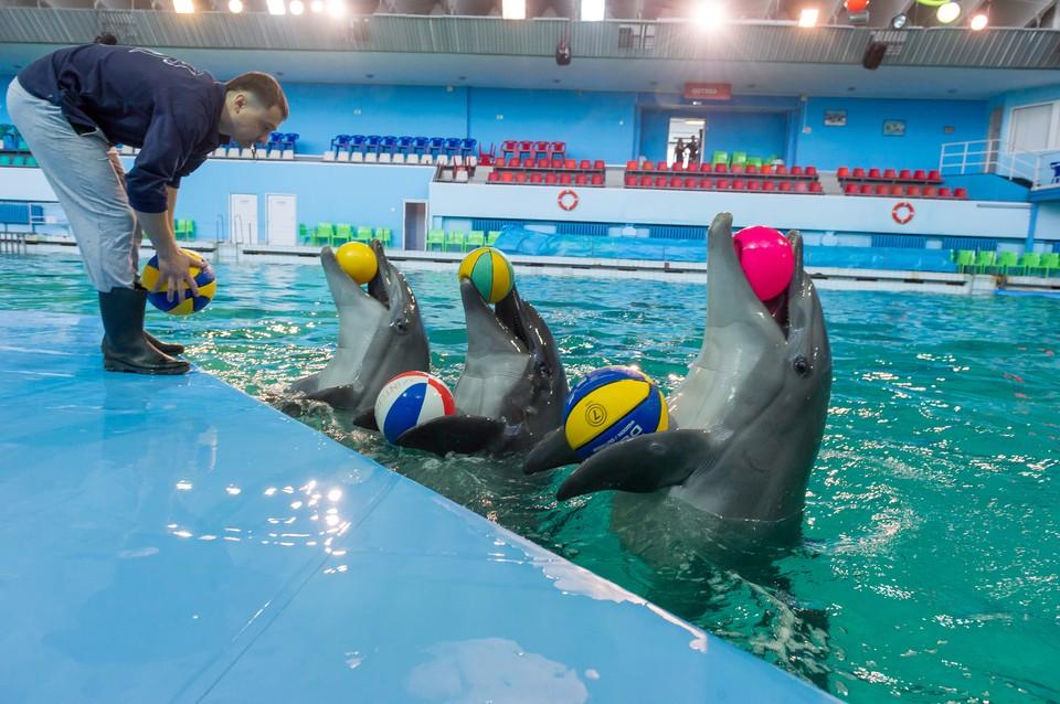 Тренировки проходят без зрителей, чтобы держать животных в форме.