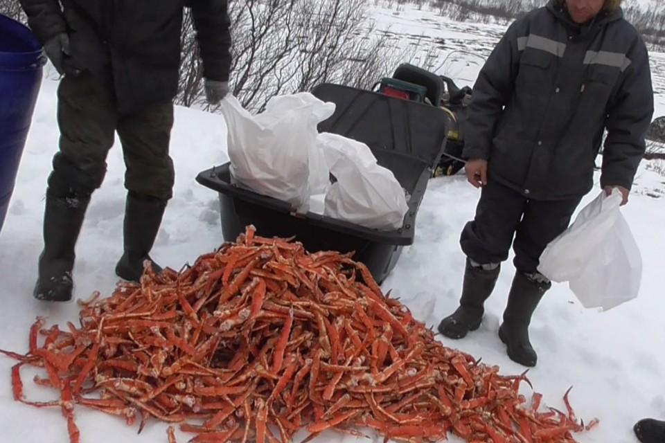 Нарушителям светит до 5 лет лишения свободы. Фото: пресс-служба погрануправления ФСБ России по западному арктическому району.