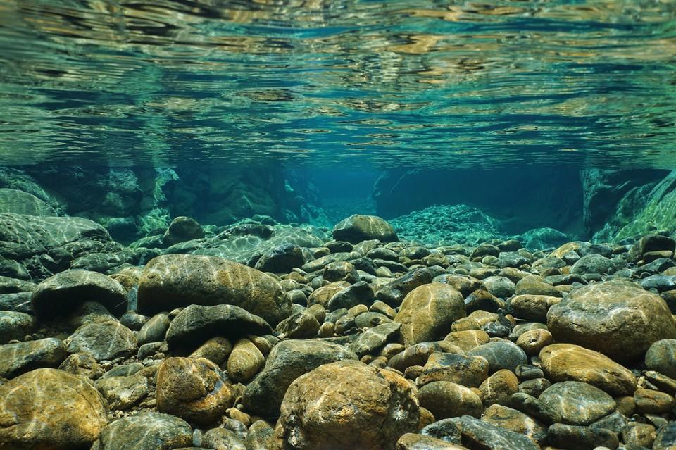 Молодь раков на водоемах средней полосы России выходит из личинок обычно в мае. Фото: shutterstock.com.