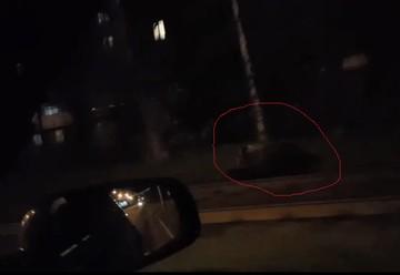 С места преступления скрылся: в Ярославле медведь покусал прохожего и убежал