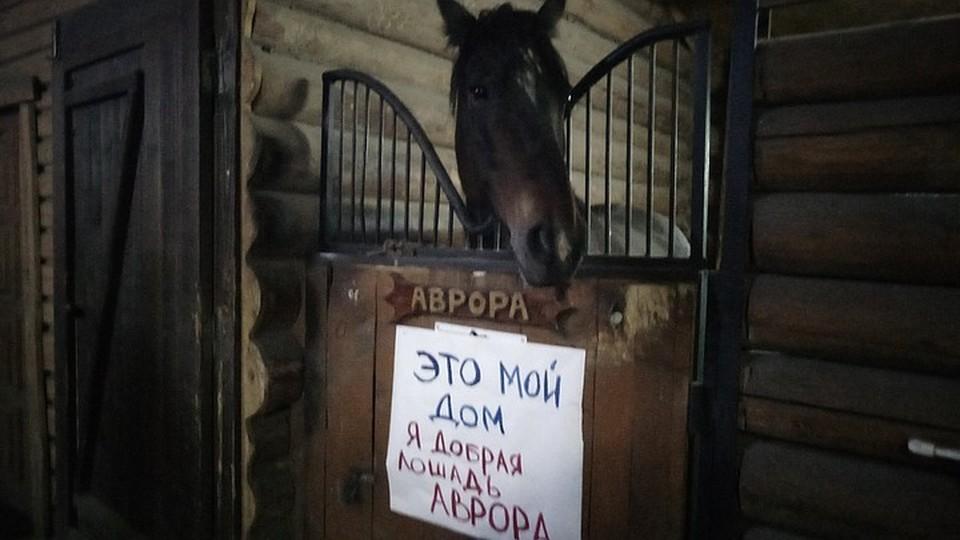 Лошади останутся в конюшнях - победил здравы смысл.