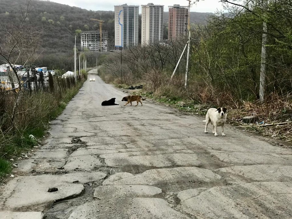 """Собаки любят выходить""""здороваться"""" к людям"""