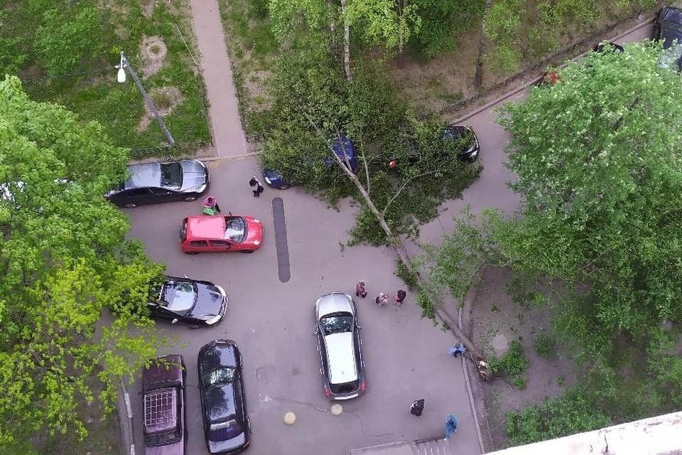 Черемуха упала на автомобили в Петербурге. Фото: vk.com/spb_today