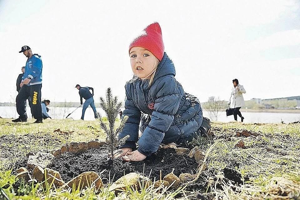 В Сыктывдинском районе высадят 9 тысяч сеянцев