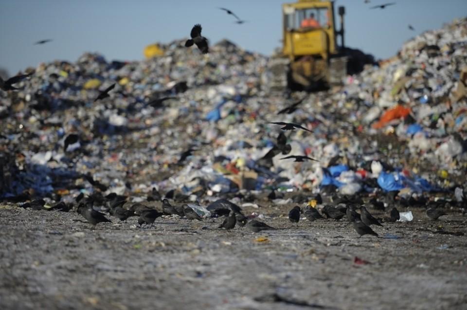 Отходы привлекают птиц, которые угрожают безопасности воздушного движения