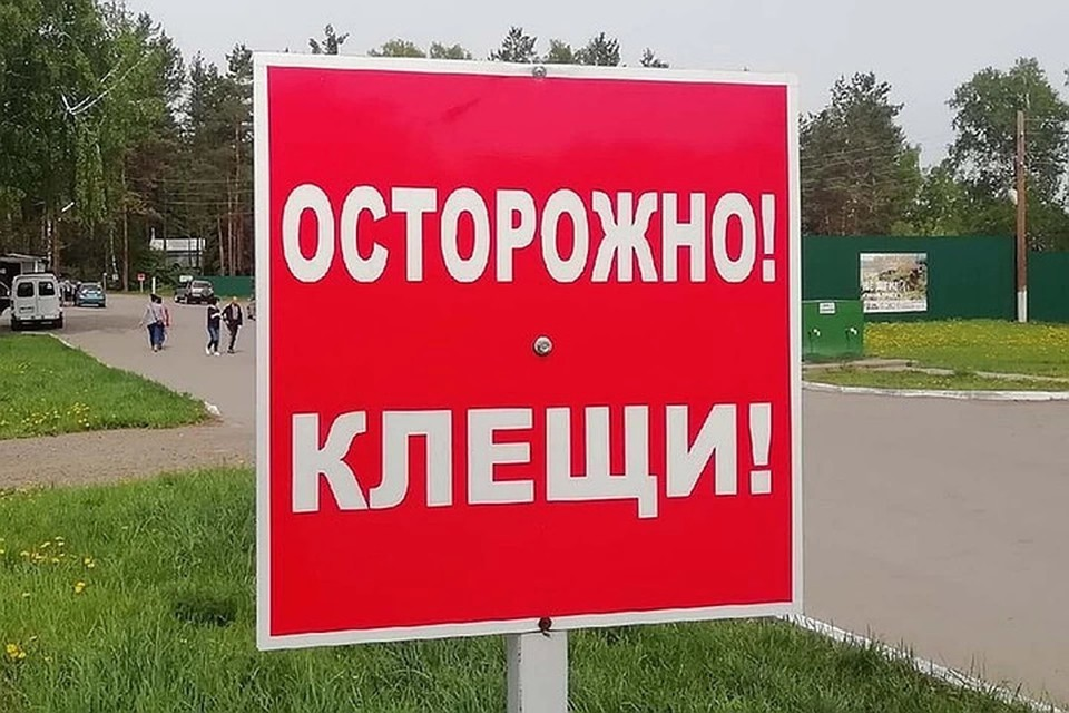 За прошедшую неделю от клещей пострадало 323 жителя Алтайского края.