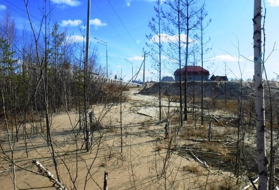 В водоохранной зоне югорской реки Картопья обнаружили серьезные нарушения. Фото Природнадзора ХМАО.