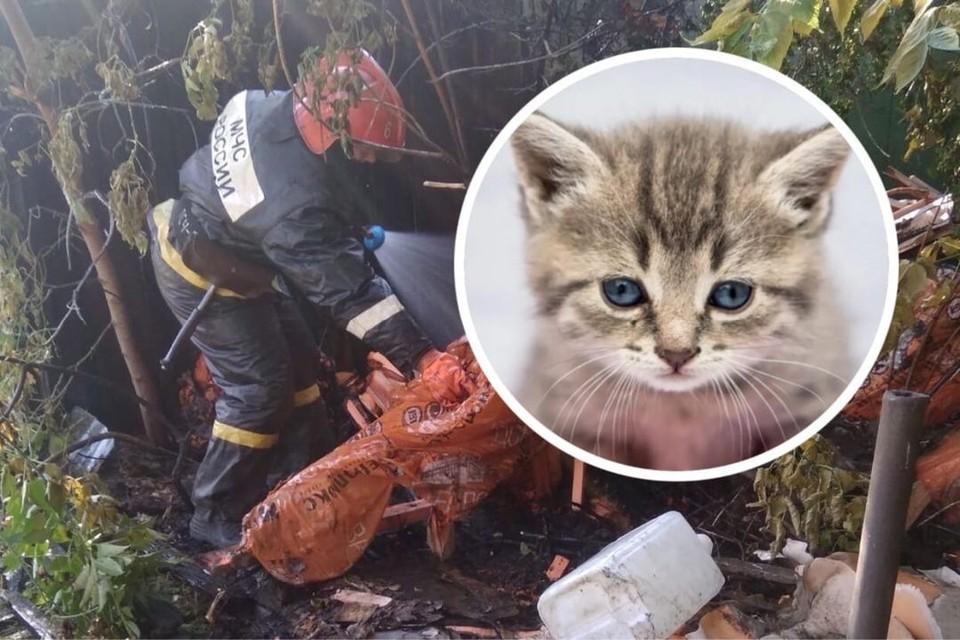 Пожар случился в приюте для бездомных животных. Фото: Алена Святова