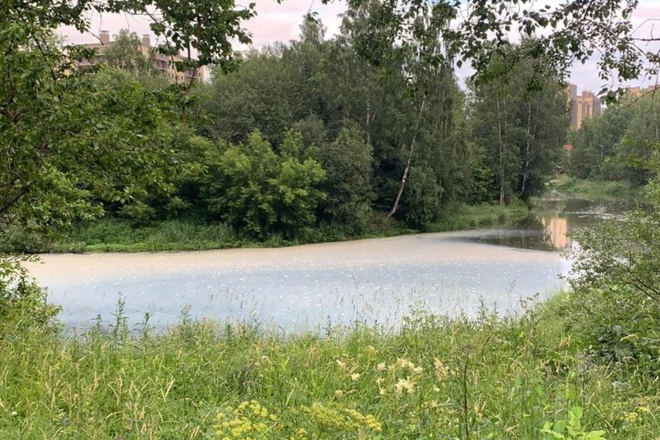 В реку Славянку вновь сбросили химикаты. Фото: vk.com/spb_today