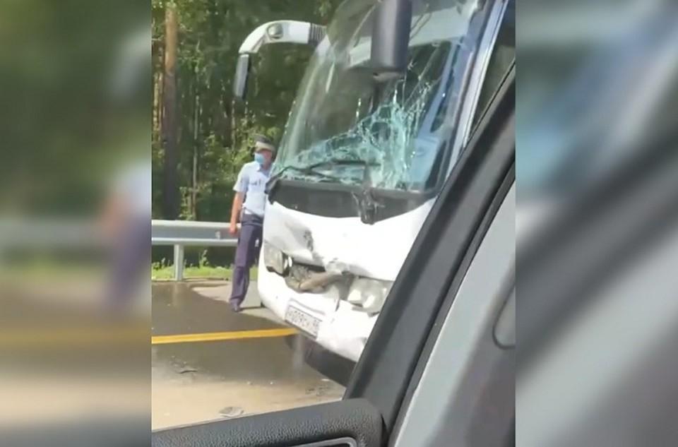 В колонне из шести автобусов ехали 130 детей и 40 взрослых. Фото: скриншот с видео