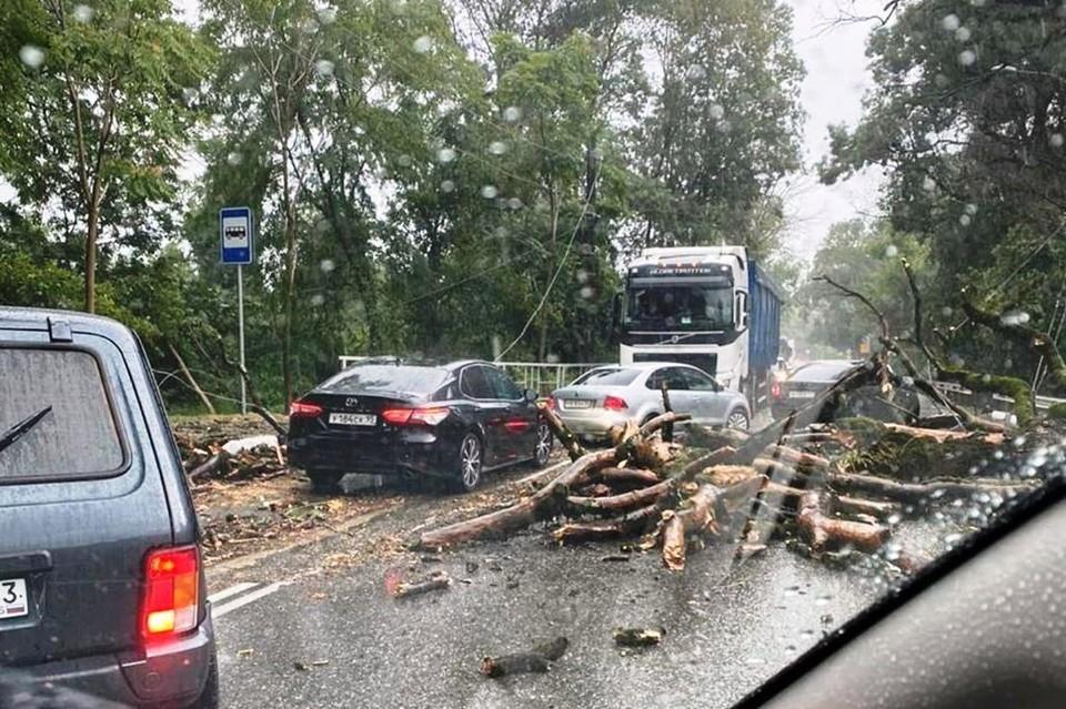 В Вардане упали деревья. Фото: instagram.com/roma_shmatoff