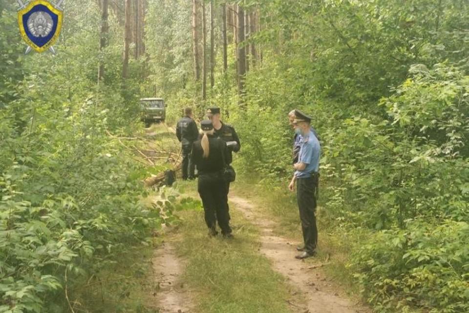 «Нарушены правила заготовки леса». В Пуховичском районе 15-летнюю девочку убило падающей сосной