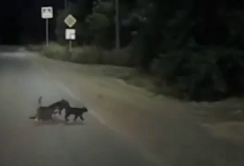 Собаку и кошек заметил проезжавший водитель