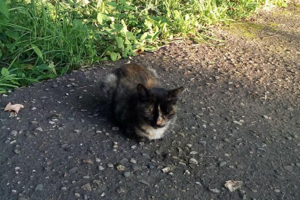 Ивановцу грозит 3 года за убийство кошки