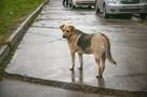 «На глазах детей начал резать»: в Лесосибирске мужчина жестоко убил бездомного щенка