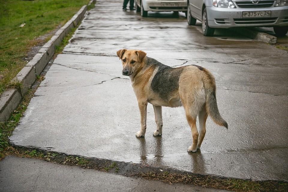Соседи уверены, что собаку убили, чтобы съесть