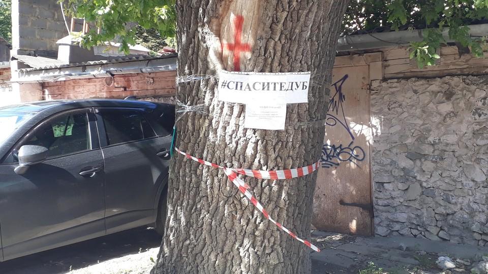Туляки просят спасти последний дуб 18 века