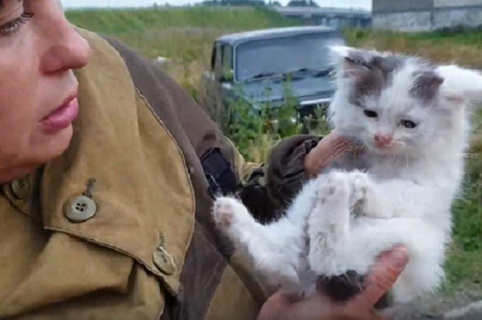 Выжившего котенка взяла себе бабушка одной из девочек. Его назвали Шипа. Фото: скриншот видео