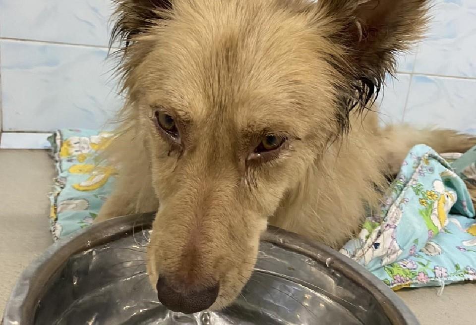 Спасенного из колодца с гудроном пса отмыли 40 литрами растительного масла и 9 литрами моющего средства. Фото предоставлено Еленой Прадчук