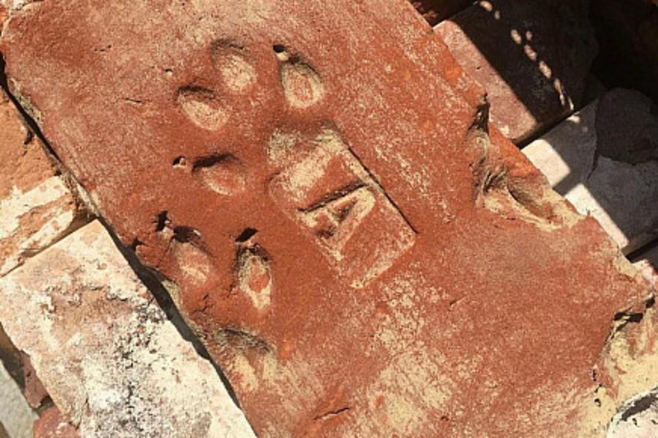 В Ростове обнаружили след 150-летней собаки. Фото: соцсети