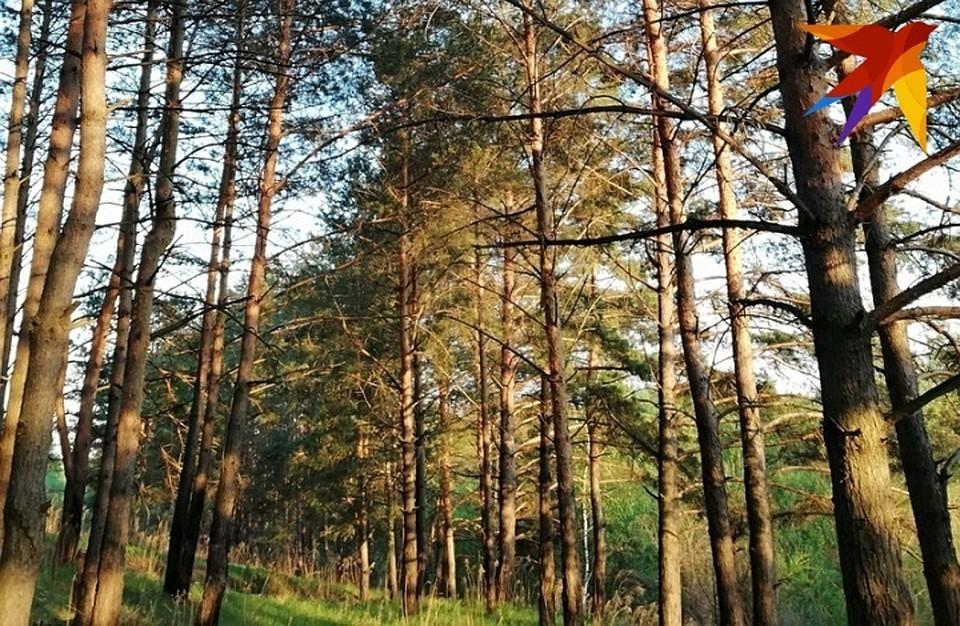 Пока можно пользоваться погожими днями конца лета и вдоволь погулять на природе.
