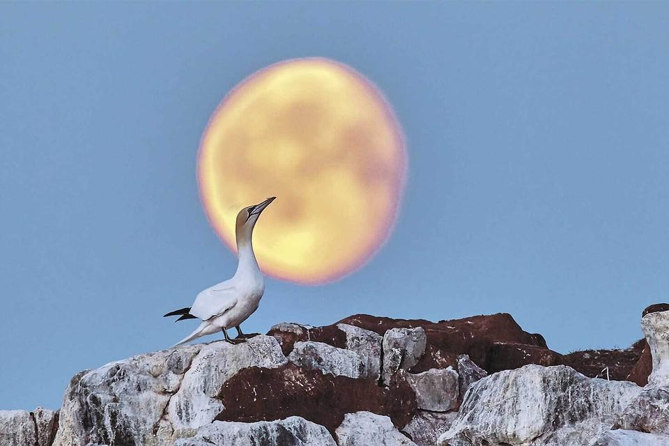 «Лунные грезы» - победитель в номинации «Дикие животные». Автор снимка - фотограф-натуралист Олег Першин.