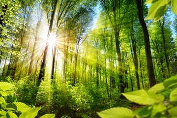В России доработают законодательство о «зеленых щитах»