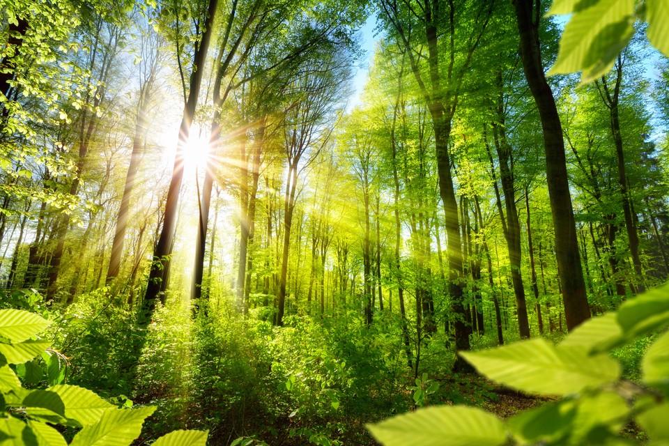Сегодня «зеленые щиты» созданы только в 10 субъектах РФ. Фото: shutterstock.com.
