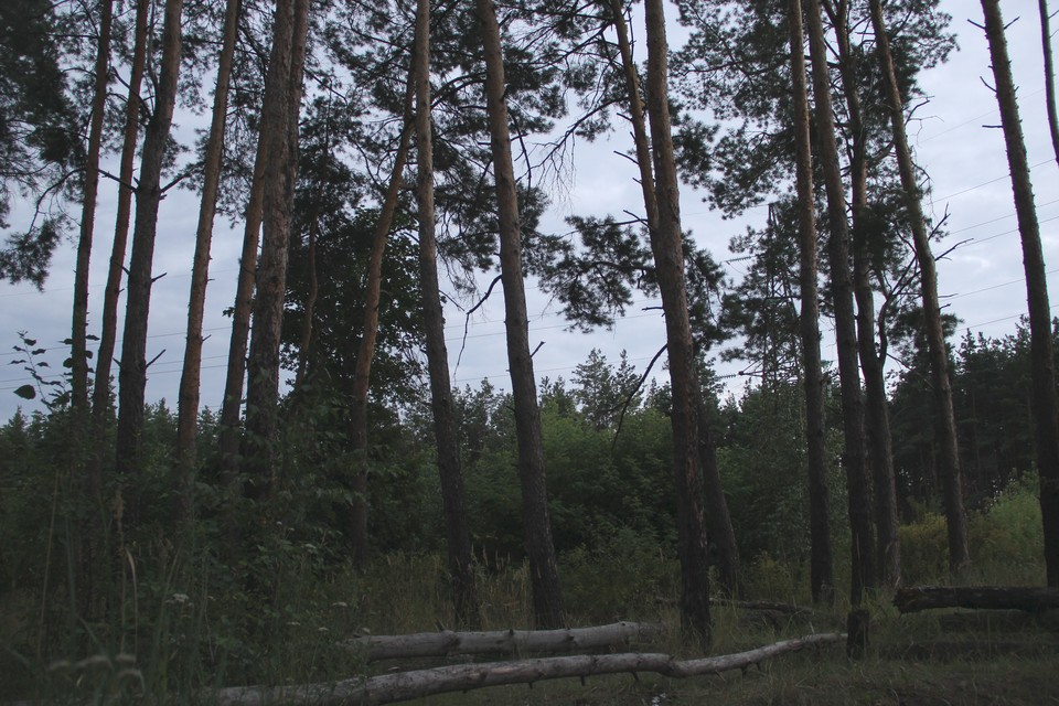 Территория может быть включена в комплексный план благоустройства Воронежа