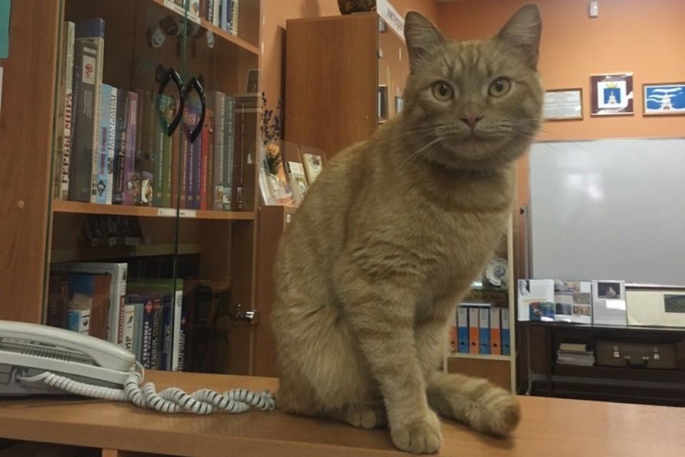 Рыжий кот Степан был символом библиотеки и всего посёлка. Фото: Городенская библиотека.
